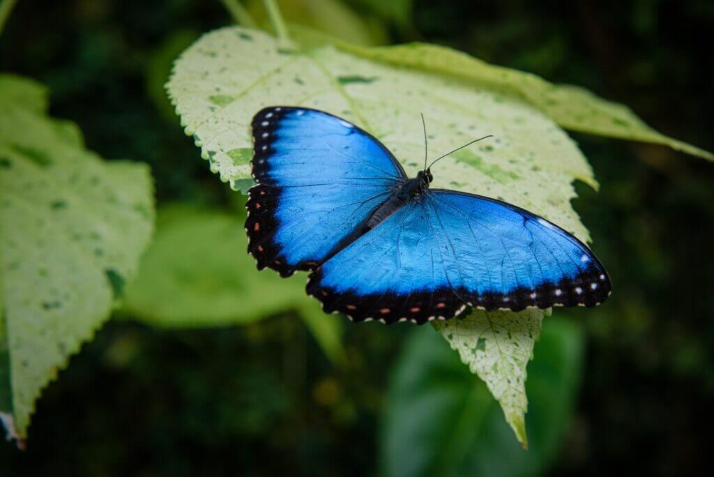 The Cardboard Butterfly Effect
